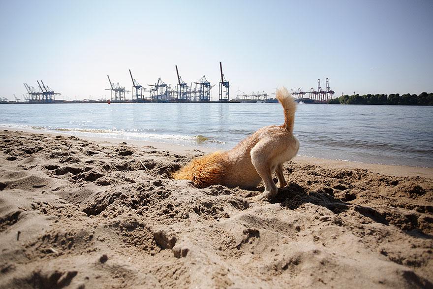 stray-dog-big-city-lion-grossstadtlowe-julia-marie-werner-6