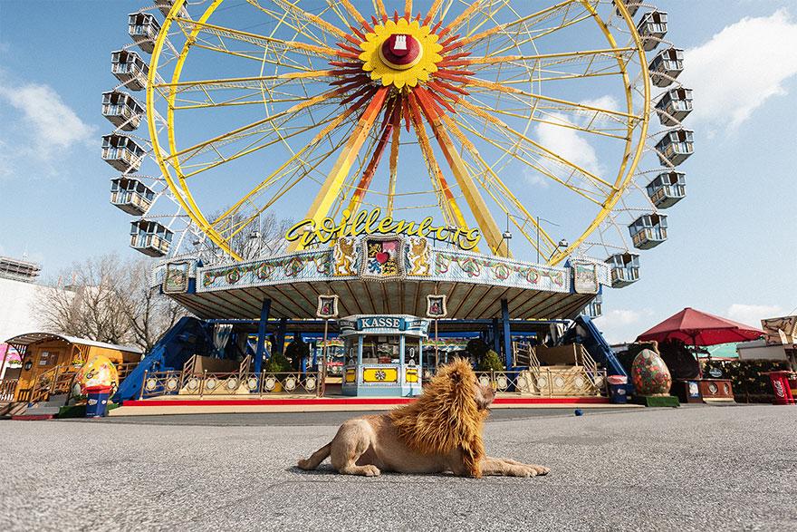 stray-dog-big-city-lion-grossstadtlowe-julia-marie-werner-9