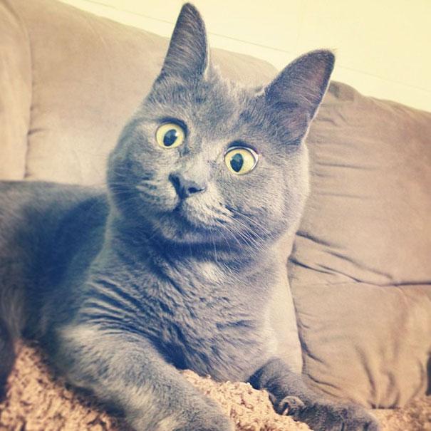 Самый удивленный кот в мире рис 9