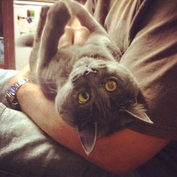 Самый удивленный кот в мире рис 11