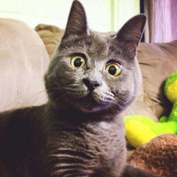 Самый удивленный кот в мире рис 6
