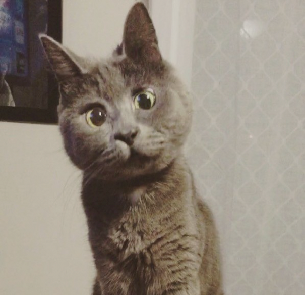 Самый удивленный кот в мире рис 3
