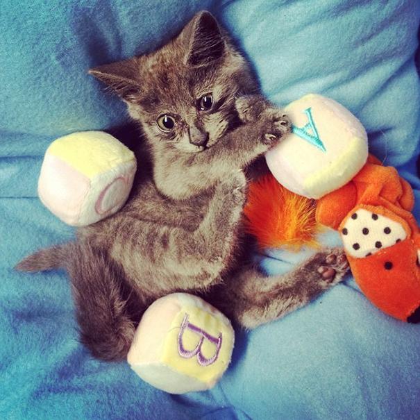 Самый удивленный кот в мире