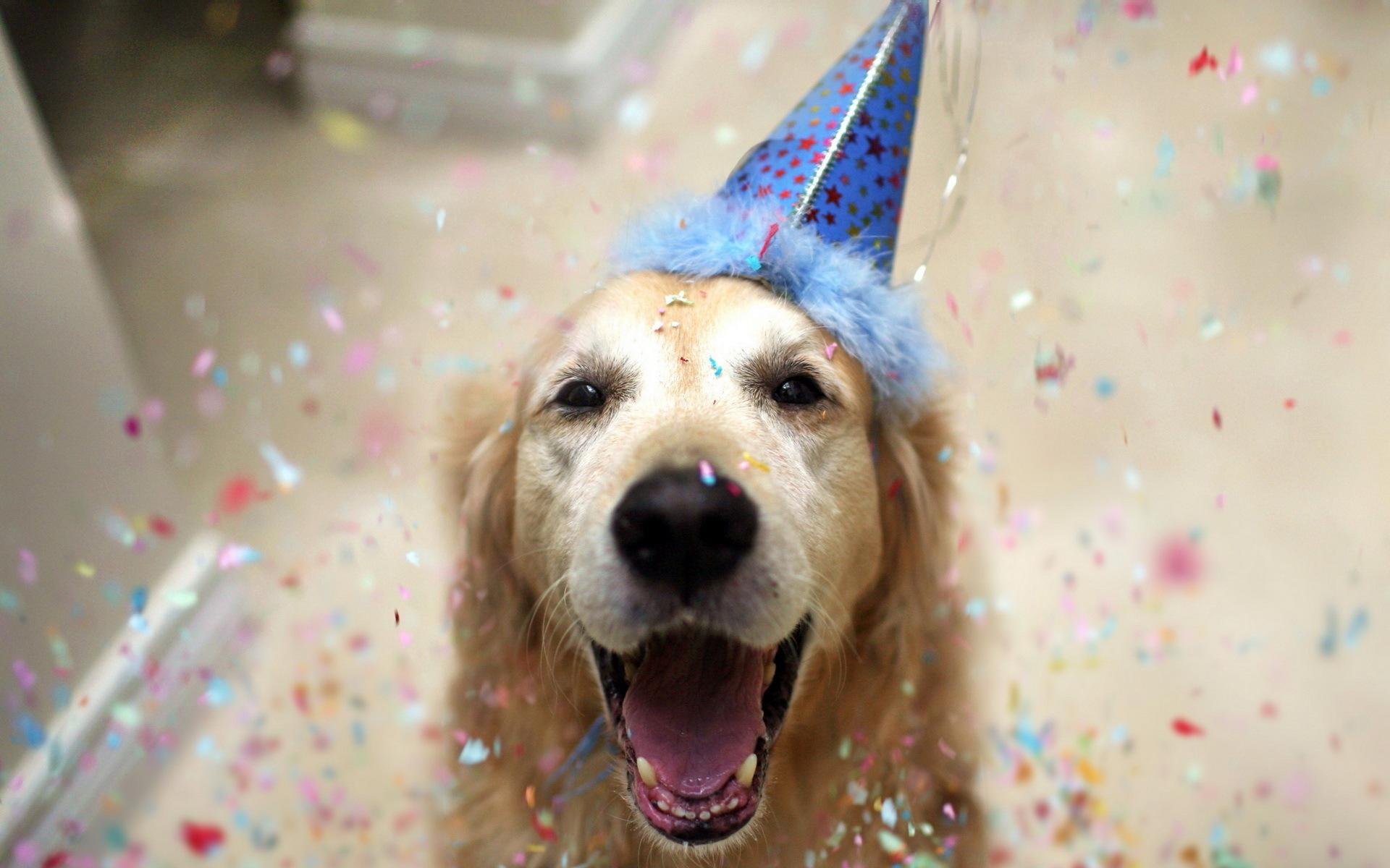 День ангела, поздравления с днем рождения фото собаки