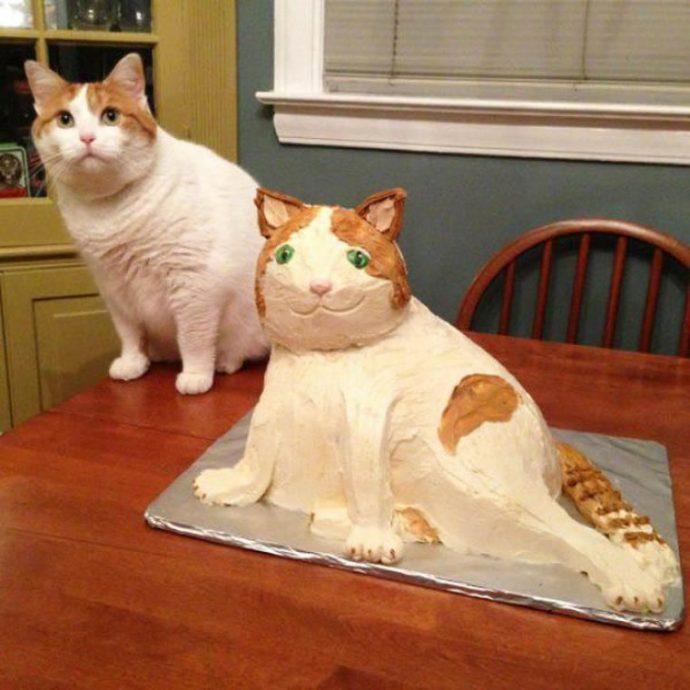 cats рис 7