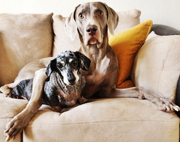 best-friends-dogs-harlow-sage-indiana-14__605