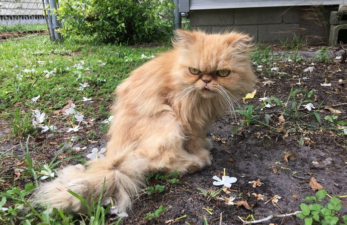 grumpy-cat-adopted-ginger-garfield-16[1]