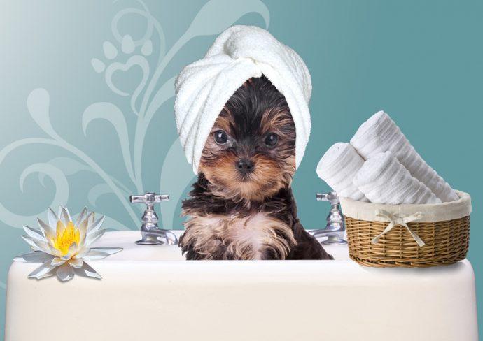 kupanie-sobak