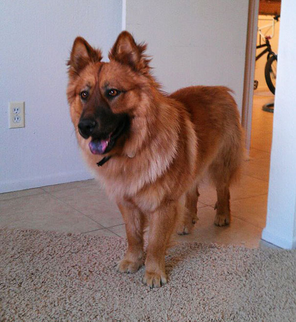 mixed-breed-dogs (1)