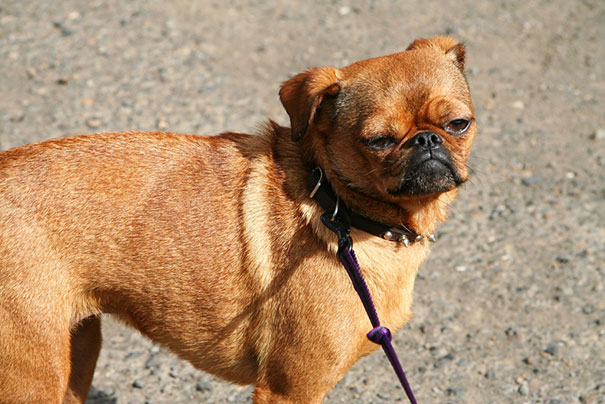 mixed-breed-dogs (10)