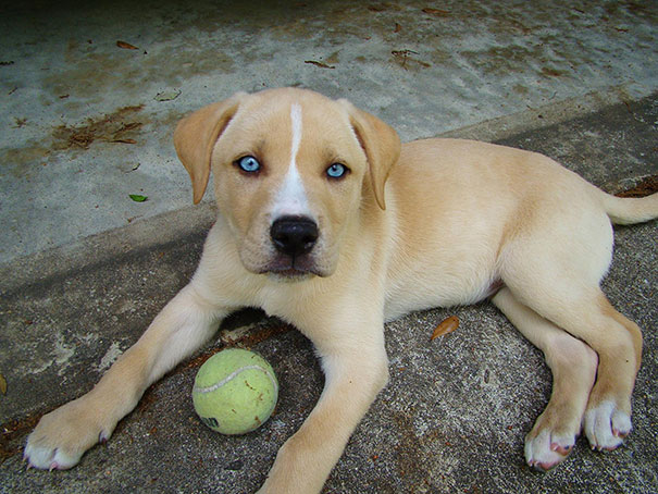 mixed-breed-dogs (11)