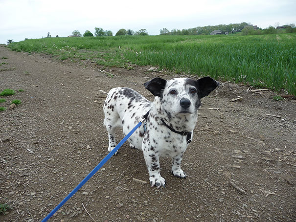 mixed-breed-dogs (14)