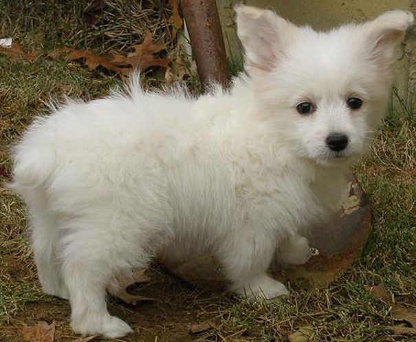 mixed-breed-dogs (16)