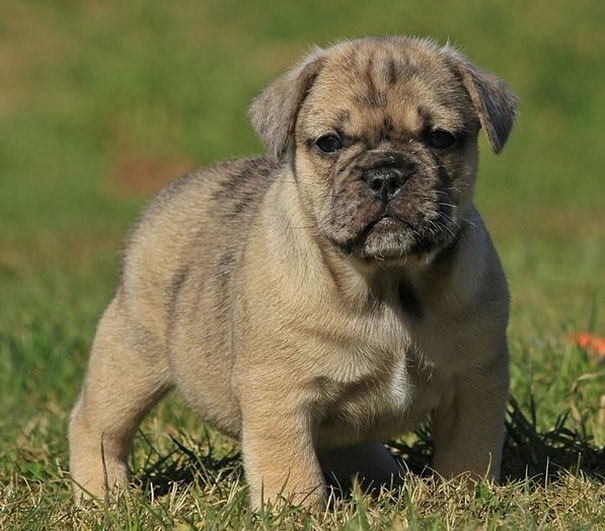 mixed-breed-dogs (3)