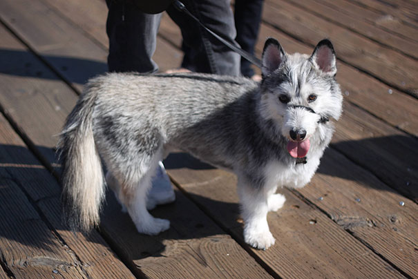 mixed-breed-dogs (4)