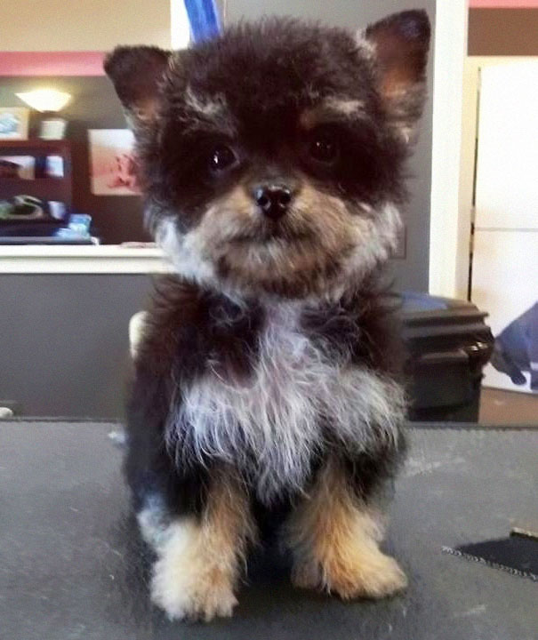 mixed-breed-dogs (9)