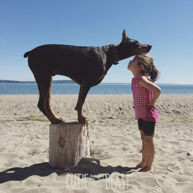 1157960-R3L8T8D-650-cutie-and-the-beast-dog-girl-seana-doberman-43