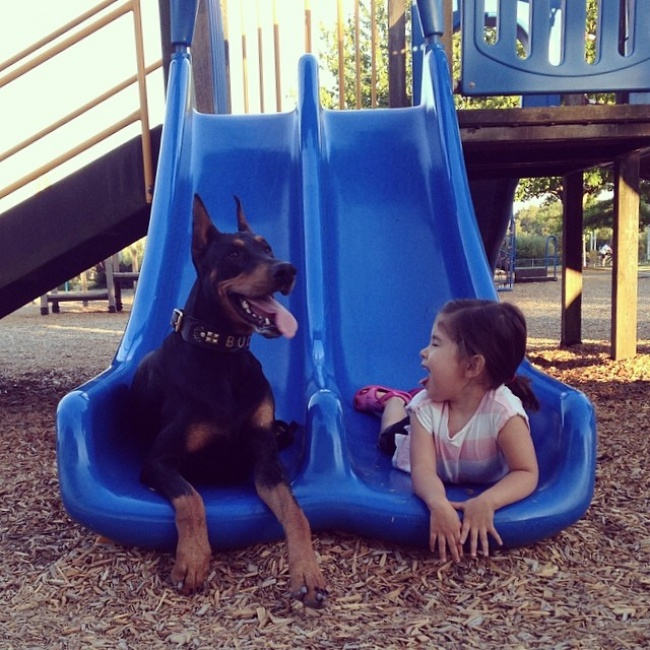 1158460-R3L8T8D-650-cutie-and-the-beast-dog-girl-seana-doberman-10
