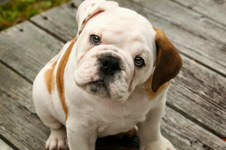 223735-doge-baby-dog