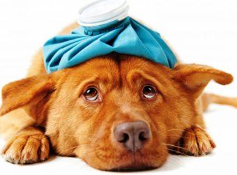 Не упусти момент! Как помочь больной собаке