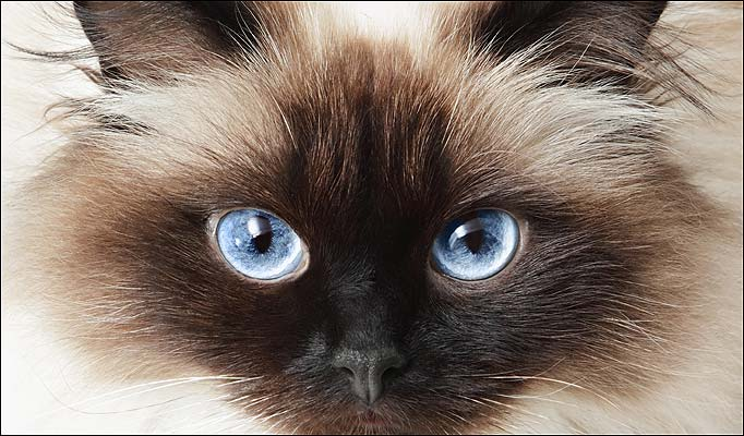 73347500_2222299_cat_eyes682_739352a