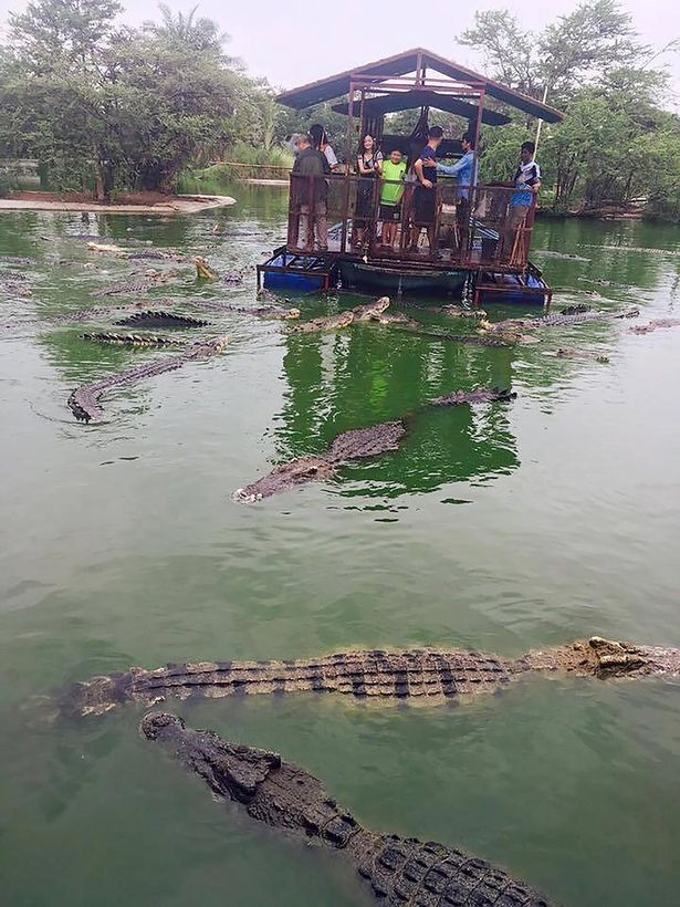 CROCODILES (1)