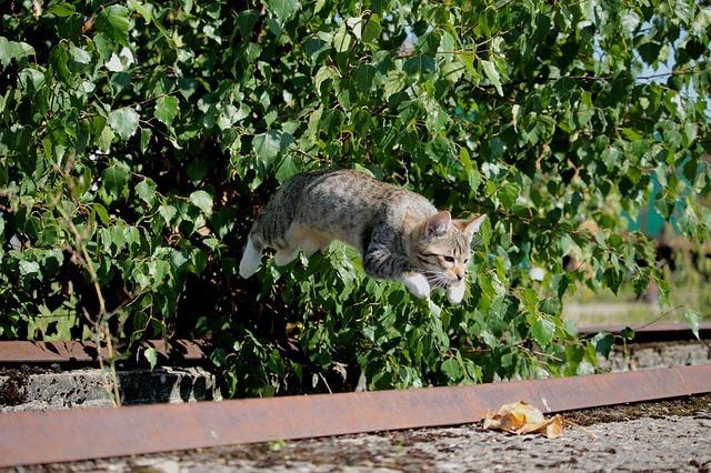 Cat-jumping1