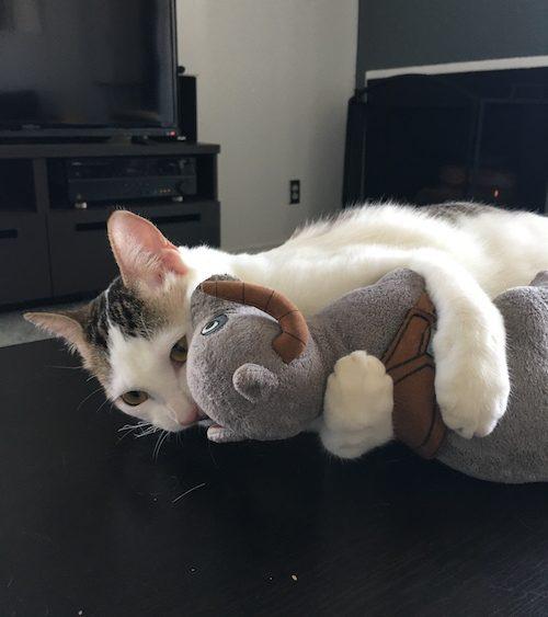 Kitten-13