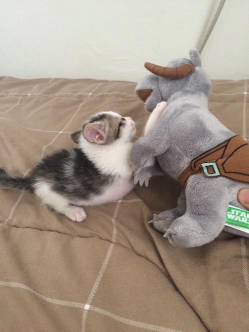 Kitten-7