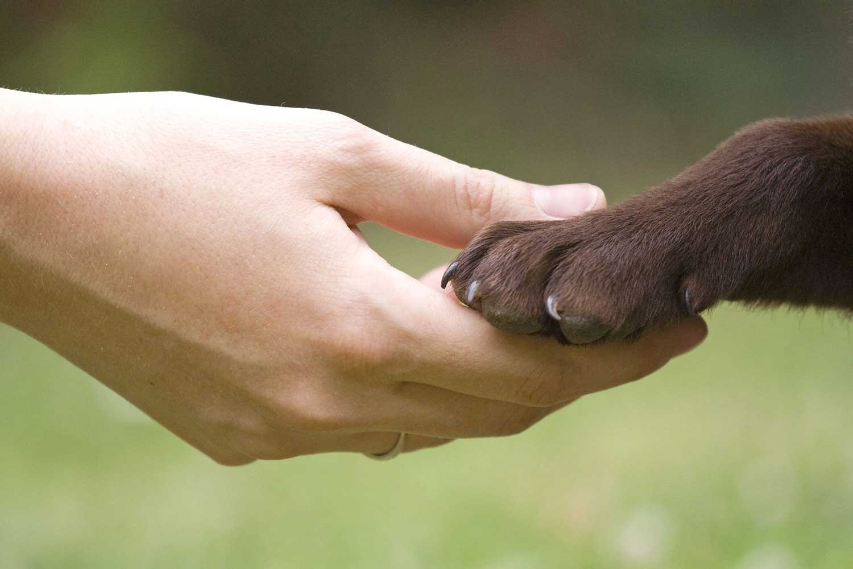 Pet-Rescue-Malaysia
