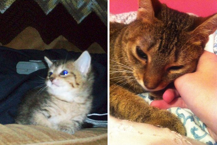 before-after-pets-growing-old-first-last-photos-14-577b77f5ae087__700