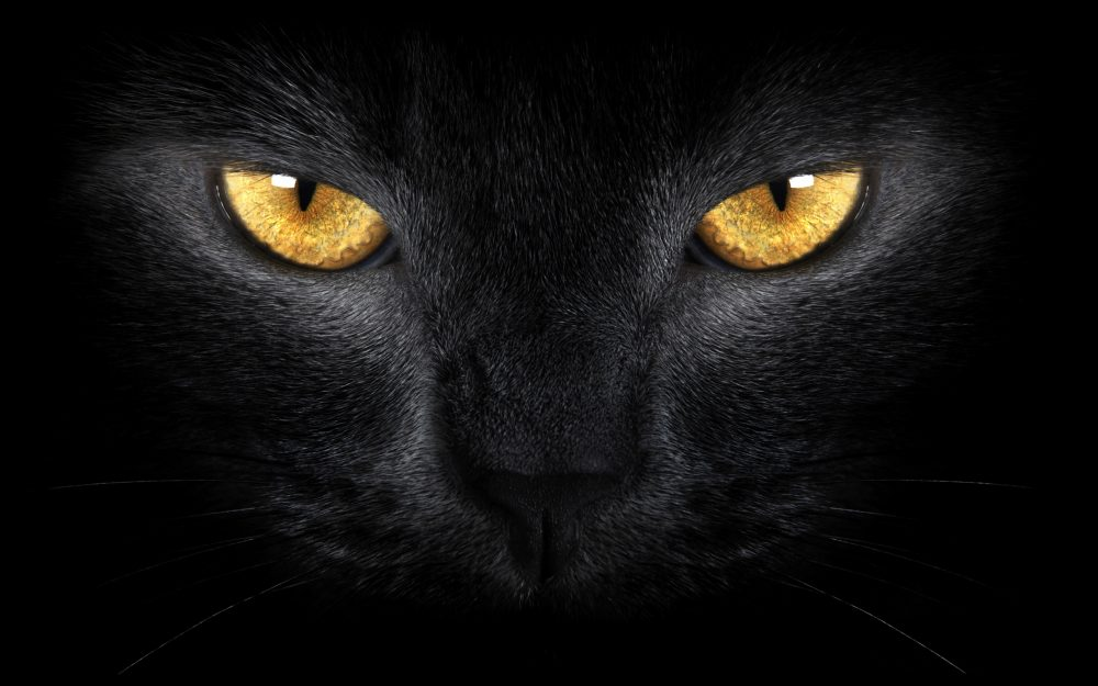 black-cat-eyes-2560x1600