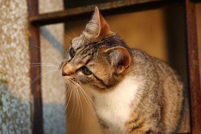 cat-1325249_1920