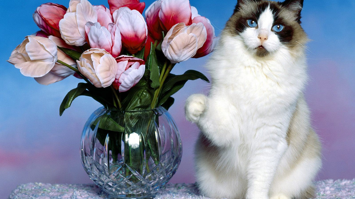 cat-with-flowers-wallpaper-1366x768