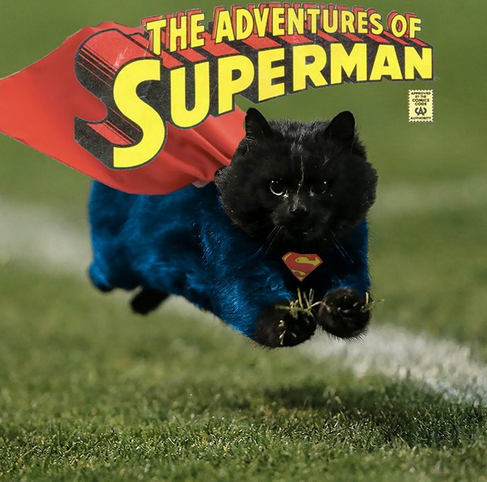 flying-cat-rugby-game-photoshop-battle-3-5784a36e5c220-png__700