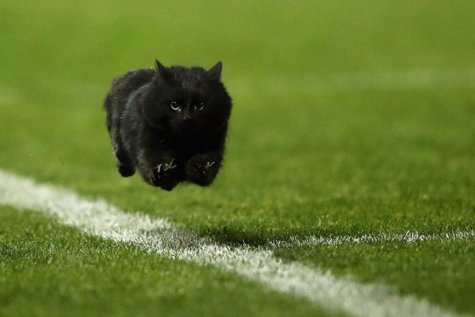 flying-cat-rugby-game-photoshop-battle-original-3