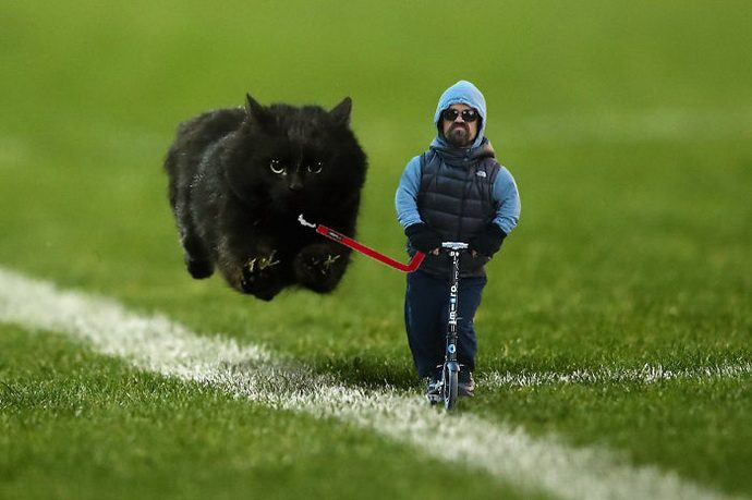 flying-cat-rugby-game-photoshop-battle-original-image2-57856530ec3a0__700