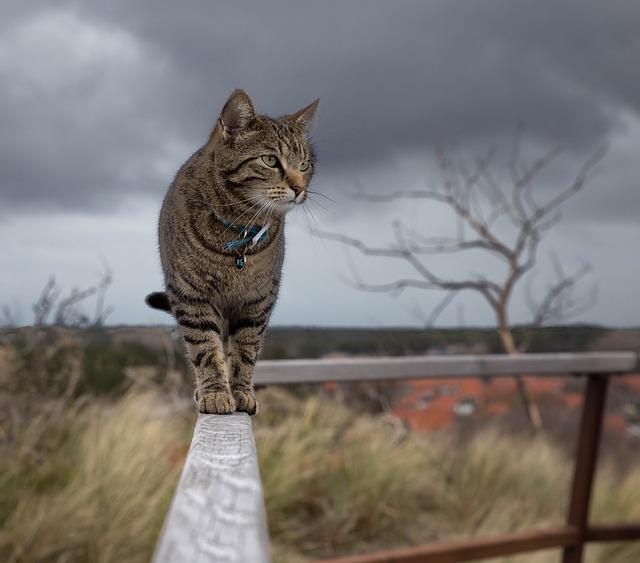 independent cat
