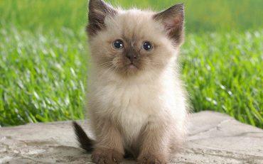 koshka_cat_kotik_milashka_kot_milyy_1680x1050
