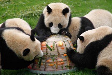 panda_icecream