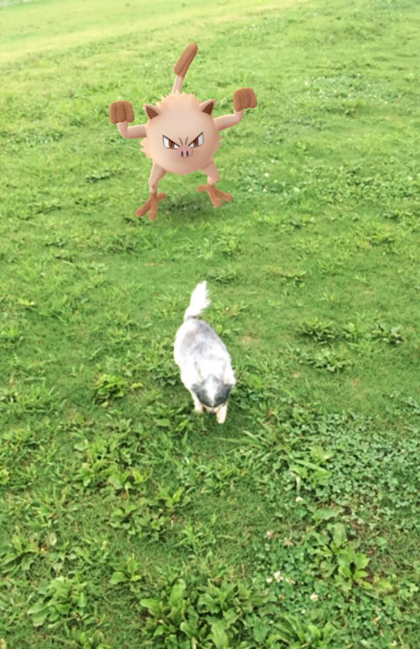 pets-can-see-pokemon-go (5)