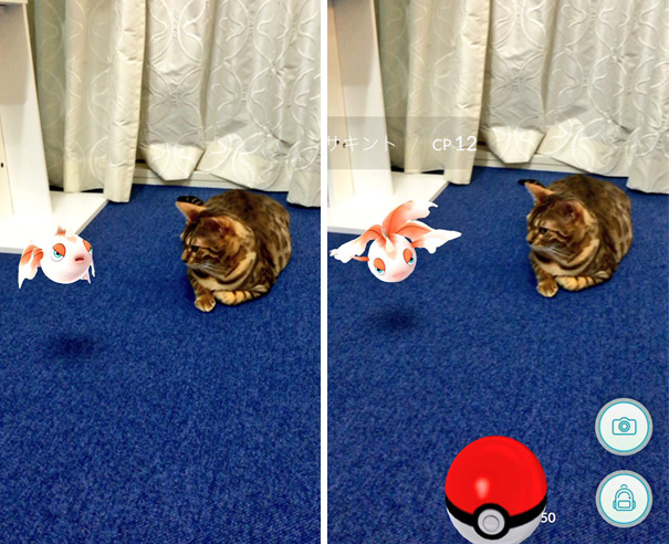 pets-can-see-pokemon-go (6)