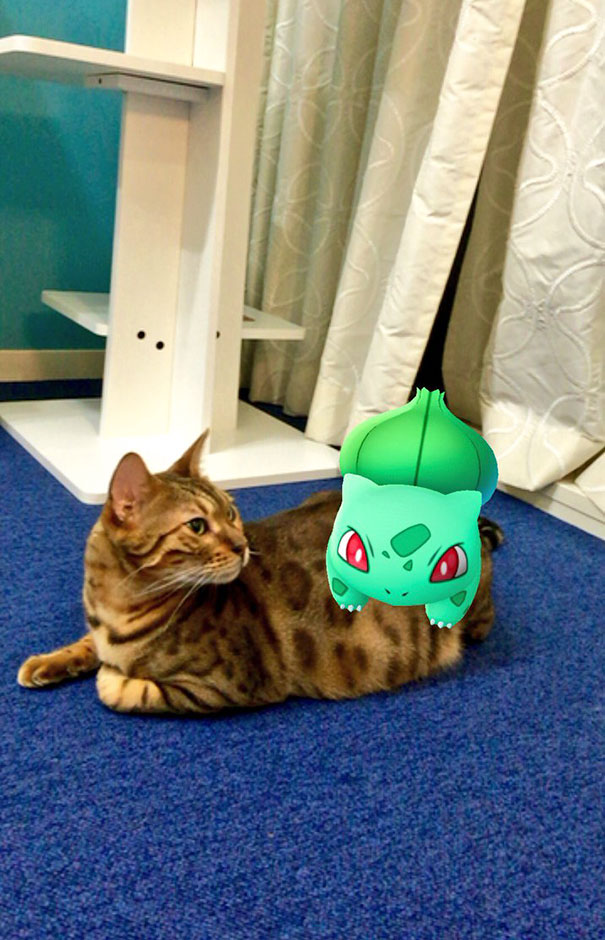 pets-can-see-pokemon-go (7)