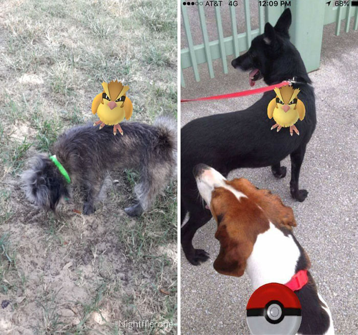 pokemon-go-dog-walking-animal-shelter-muncie-11