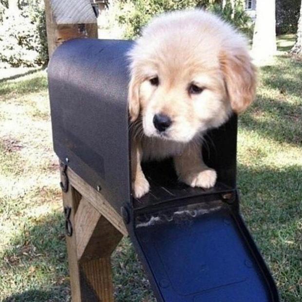 puppy (7)
