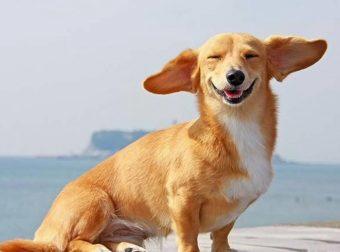 Все, чего ты еще не знал о собакотерапии! 6 неожиданных фактов
