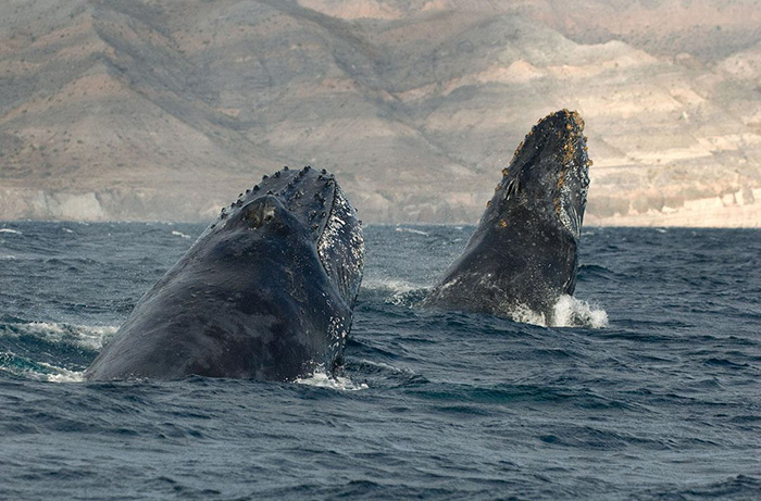 whales-dolphins рис 8