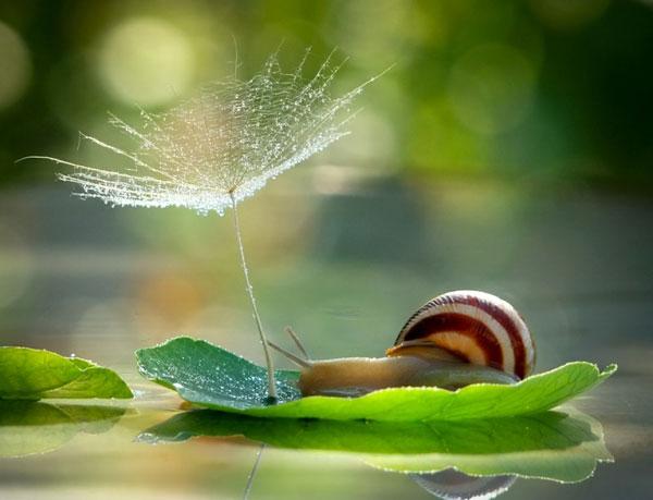 world-of-snails (1)