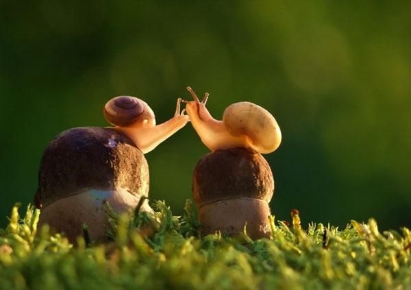 world-of-snails (10)