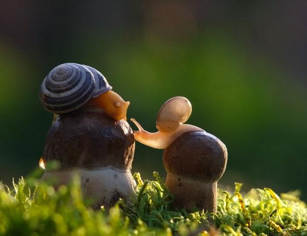 world-of-snails (11)